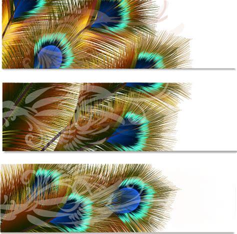 peacock feather vector design  vector