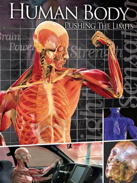 Human Body Pushing The Limits Tv Show News, Videos, Full Episodes And More Tvguidecom