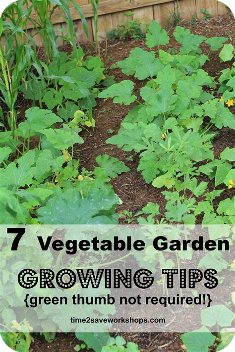 vegetable garden tips and ideas green thumb not required 7 super vegetable garden growing tips