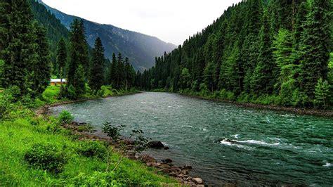 Download Green Forest River Landscape Wallpaper For