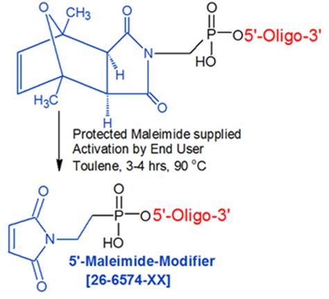 Modification To Product by Maleimide 5 Oligo Modifications From Gene Link