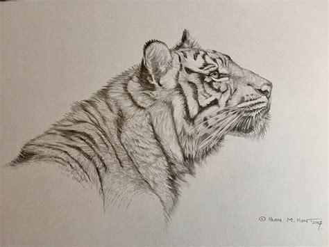 graphite pencil wildlife studies animal art sketches