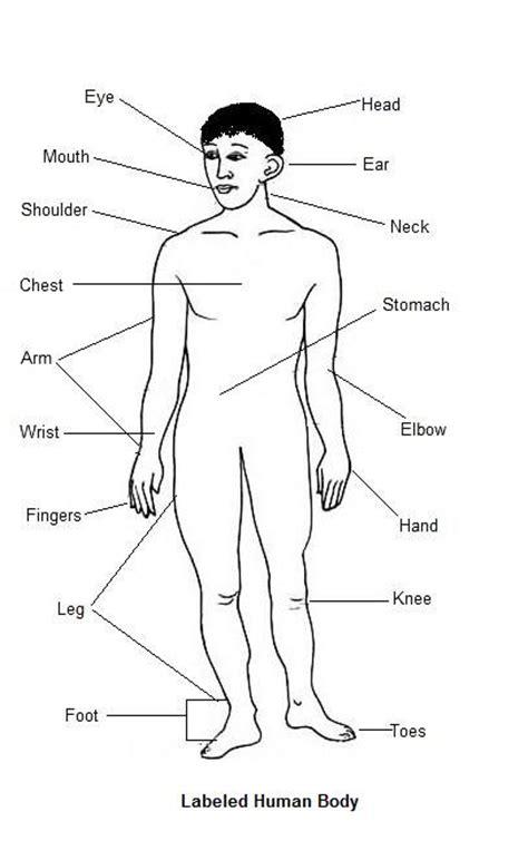 hindi vocabulary  body parts hindi language blog