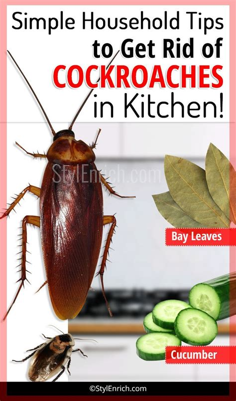 rid  cockroaches  kitchen  simple
