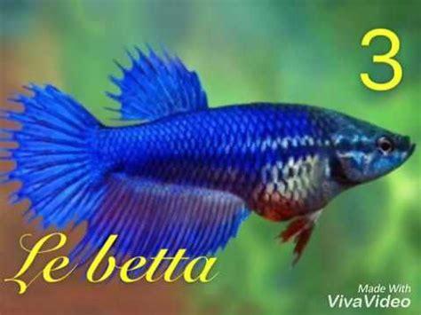 les principaux poisson d aquarium d eau douce