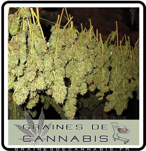 chambre de sechage cannabis le séchage du cannabis