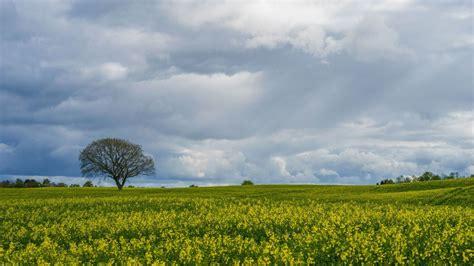 bäume die im winter grün bleiben die 71 besten baum hintergrundbilder