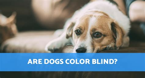 are dogs color blind are dogs colour blind and what colours do dogs see