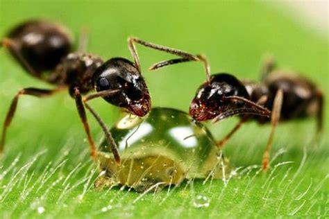 Ameisen Bekämpfen Im Haus Und Im Garten  Hausmittel Gegen