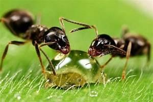 Ameisen Im Garten : ameisen bek mpfen im haus und im garten hausmittel gegen ameisen ~ Frokenaadalensverden.com Haus und Dekorationen