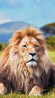 Wild Animals Wallpaper HD for Android - APK Download