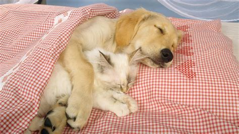 Sleep And Pets by Your Pets Strange Sleep Patterns 171 The Pet Product Guru