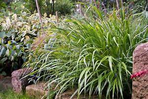 Schattenpflanzen Pflanzen Fr Schattige Standorte Und