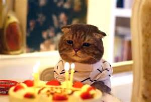happy birthday cats how cats celebrates their birthday 28 pics curious