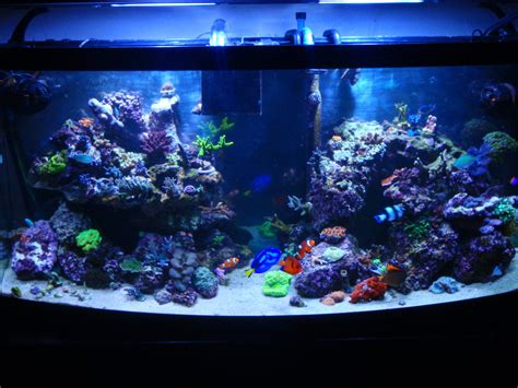 Reef Aquarium Aquascaping by Downhill Biker S Reef Tanks Photo Id 23462