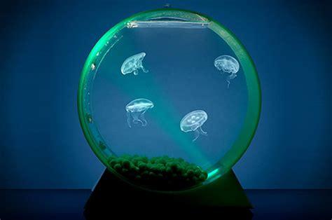 small-round-aquarium-jellyfish