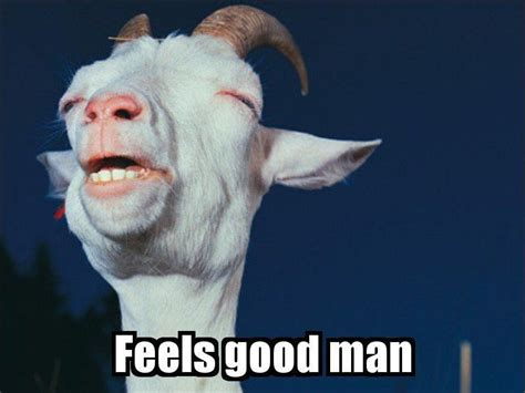 Good Meme Captions - sharing 30 funny animal captions part 10 30 pics love i love funny animal sweet funny
