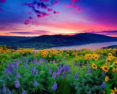 nature landscape yellow flowers and blue mountain lake