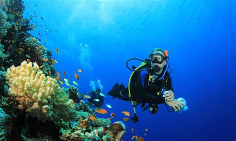 onboard experience royal caribbean international