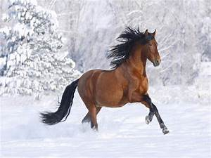 Horses In The Snow Quotes. QuotesGram