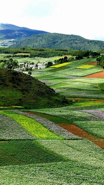 Yunnan Nature China Flowers Landscapes Bloom Mobile
