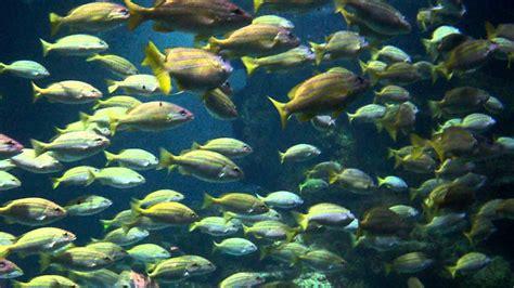 tropical fish  sea life centre aquarium birmingham