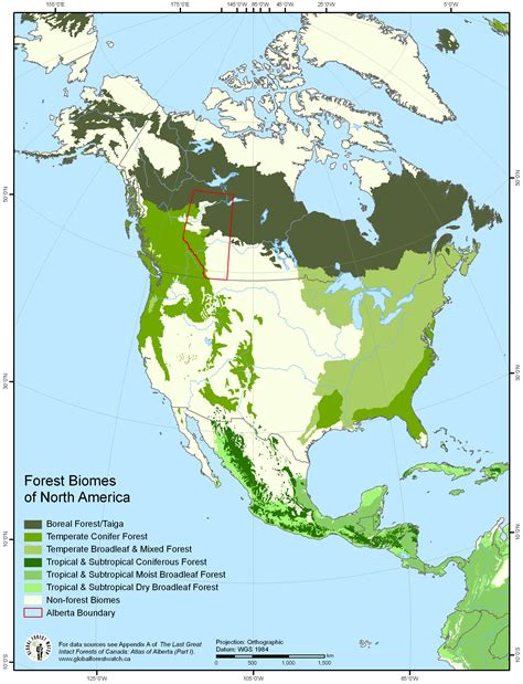 Forest Biomes Of North America  Concept Map Pinterest