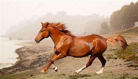 horse running region coast collage depositphotos skvortsova foggy
