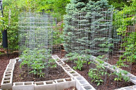 Small Vegetable Garden Ideas Queensland