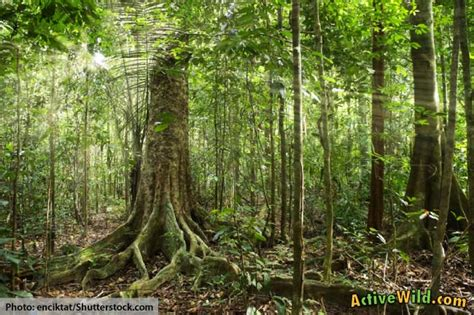 amazon rainforest plants animals