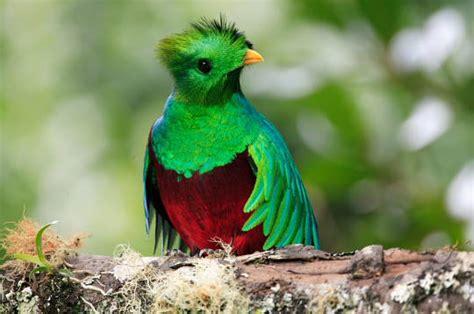 cuisine l internaute quetzal les animaux du costa rica 14 photos des