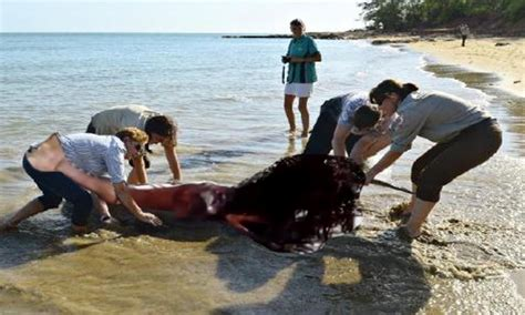 MERMAID CORPSE WASHES UP ON BEACH - YouTube