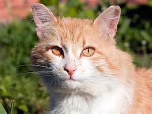 tnr cats feral cat care and tnr a beginner s guide petfinder