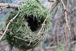 Wer Baut Garagentorantrieb Ein : wer baut so ein tolles moos nest v cklabruck ~ Watch28wear.com Haus und Dekorationen