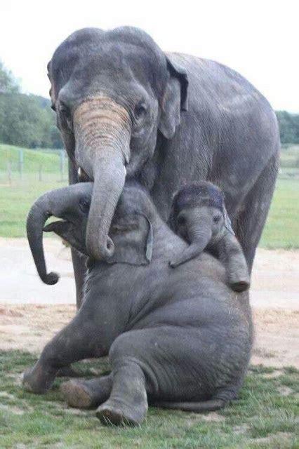 animal families     family portrait