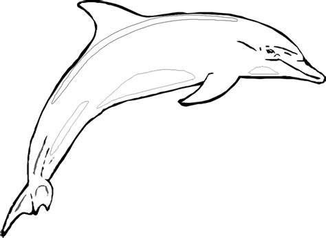 bottlenose dolphin drawing clipart panda  clipart