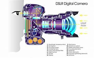 This Cutaway Diagram Shows The Inside Of A Dslr
