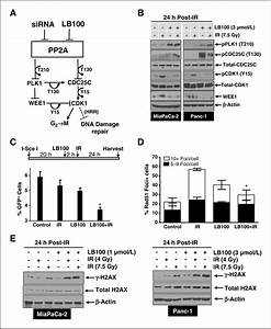 Inhibition Of Protein Phosphatase 2a Radiosensitizes