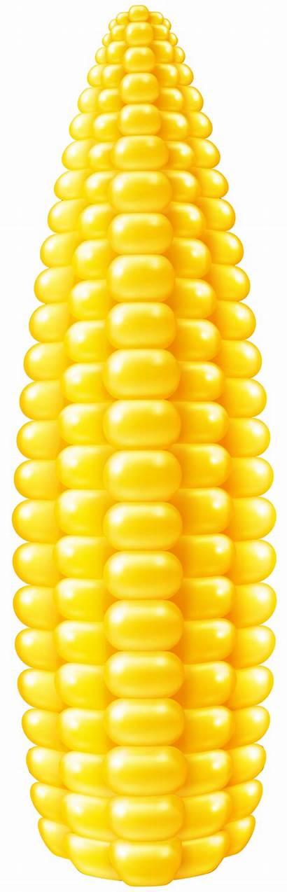 Corn Clip Clipart Kernel Vegetables Transparent Yopriceville