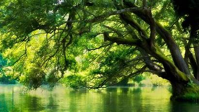 Forest Nature Water Landscape Trees River Tree