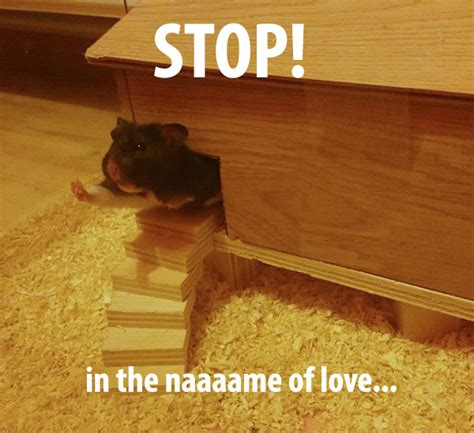 hamster  hand    house funny
