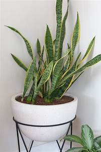 The, Indoor, Plants, I, U0026, 39, M, Keeping, Alive, In, My, House