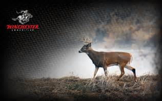 Winchester Deer Hunting Wallpapers