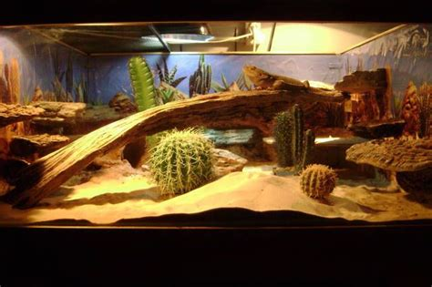 bearded terrarium decor 19 best images about bearded dragons on