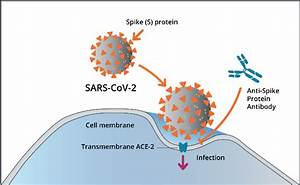 Structure And Mcb Of Sars Cov 2