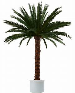 Palmen Kaufen Baumarkt : palmen palmen shop ~ Orissabook.com Haus und Dekorationen