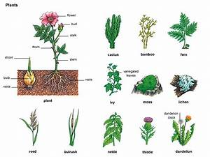 163 Types Of Flowers A To Z With Pictures J Birdny