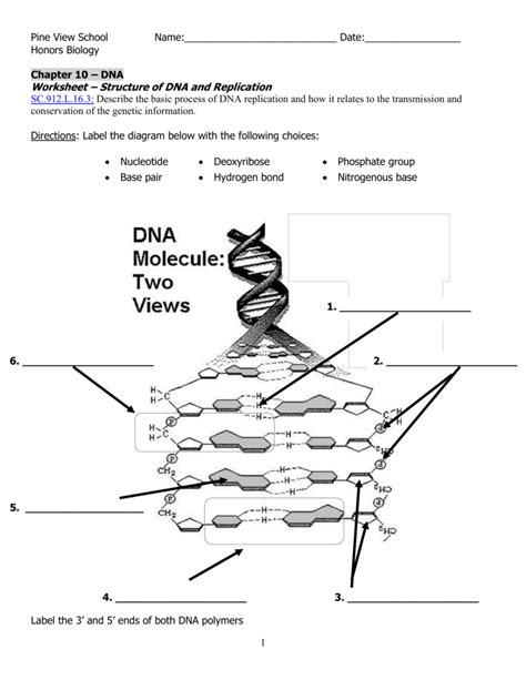 dna molecule two views worksheet labeled dna molecule and replication worksheet worksheets