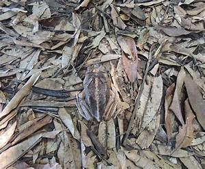 Top 23 Spectacular Examples Of Animal Camouflage  Photo