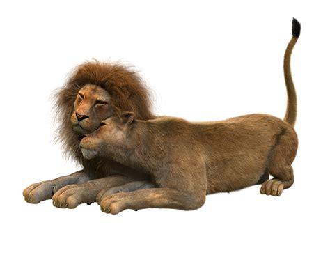illustration lion lions couple smooch cat